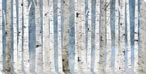 Birch Trees II Wrapped Canvas Giclee Art Print Wall Art