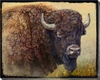Bison Portrait I Wrapped Canvas Giclee Print Wall Art
