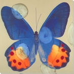 Blue and Orange Butterfly Study Wrapped Canvas Giclee Print