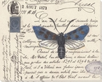 Blue Moth Wrapped Canvas Giclee Print Wall Art