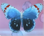 Blue with Red Butterfly Study Wrapped Canvas Giclee Print Wall Art