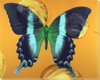 Bold Colored Butterfly Study Wrapped Canvas Giclee Print Wall Art