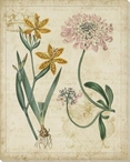 Botanical Repertoire Flowers I Wrapped Canvas Giclee Print