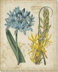 Botanical Repertoire Flowers II Wrapped Canvas Giclee Print