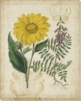 Botanical Repertoire Flowers III Wrapped Canvas Giclee Print