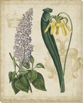 Botanical Repertoire Flowers IV Wrapped Canvas Giclee Print