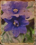 Bright Purple Violet Flowers Wrapped Canvas Giclee Print Wall Art