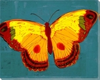 Brilliant Teal Butterfly Wrapped Canvas Giclee Print Wall Art