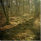 Broken Trail Forest Scene Wrapped Canvas Giclee Print Wall Art