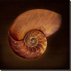 Burnished Nautilus Wrapped Canvas Giclee Print Wall Art