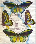 Butterfly Map III Wrapped Canvas Giclee Print Wall Art