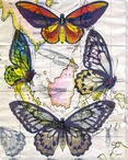 Butterfly Map IV Wrapped Canvas Giclee Print Wall Art