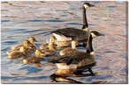 Canadian Armada Canada Geese Wrapped Canvas Giclee Print Wall Art