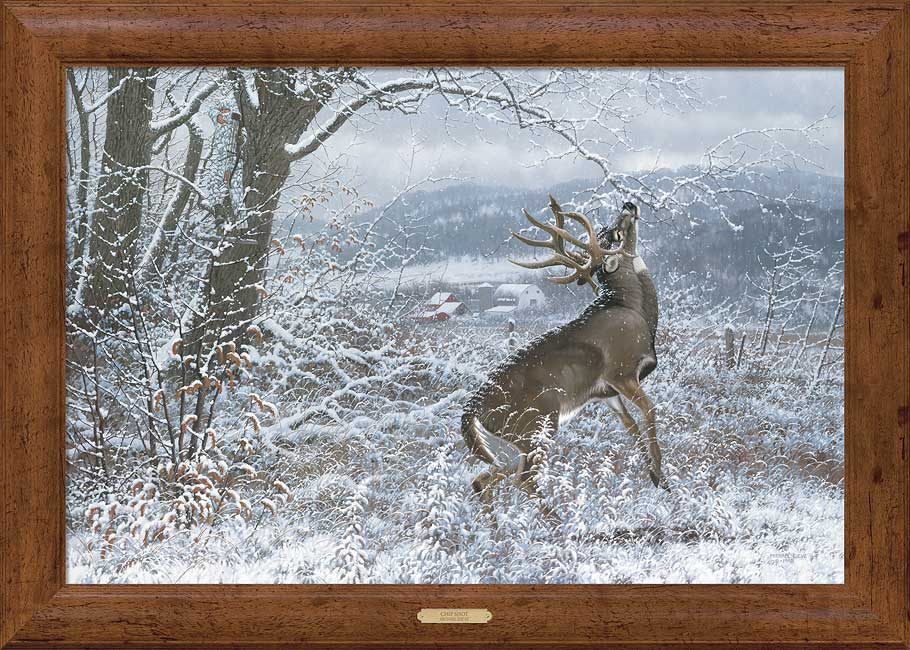Framed Deer Pictures