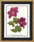 Clematis Madame Flowers Matted and Framed Art Print Wall Art