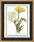 Clypeolata Flowers Matted and Framed Art Print Wall Art