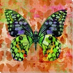 Colorful Butterflies 4 Wrapped Canvas Giclee Art Print Wall Art