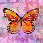 Colorful Butterflies 5 Wrapped Canvas Giclee Art Print Wall Art