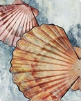 Colorful Shells Wrapped Canvas Giclee Print Wall Art