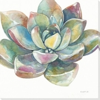 Colorful Succulent Flower 2 Wrapped Canvas Giclee Print Wall Art