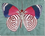 Colors and Swirls Butterfly Study Wrapped Canvas Giclee Print
