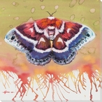 Columbia Silkmoth Wrapped Canvas Giclee Print Wall Art