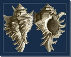 Conch Shells on Navy II Wrapped Canvas Giclee Print Wall Art