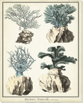 Coral Species III Wrapped Canvas Giclee Print Wall Art