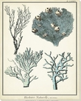 Coral Species VII Wrapped Canvas Giclee Print Wall Art