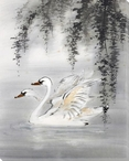 Courting Swan Birds Wrapped Canvas Giclee Print Wall Art