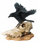 Crow with Open Wings on Sheep Skull Bird Sculpture