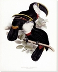 Culmenated Toucan Birds Wrapped Canvas Giclee Print Wall Art