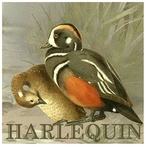 Custom Just Ducky Harlequin Ducks Vintage Style Metal Sign