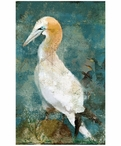 Custom Large Gannet Seabird Vintage Style Metal Sign