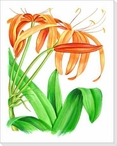 Day Lily Flower Wrapped Canvas Giclee Print Wall Art