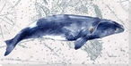Deep Sea Watercolor Right Whale Wrapped Canvas Giclee Print