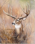Deer in the Wild Wrapped Canvas Giclee Print Wall Art
