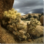 Desert Cactus Wrapped Canvas Giclee Print Wall Art