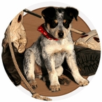 Dog and Lasso Absorbent Round Beverage Coasters, Set of 12