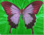 Elegant Butterfly Study Wrapped Canvas Giclee Print Wall Art