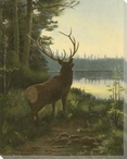 Elk in the Wild Wrapped Canvas Giclee Print Wall Art