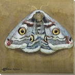 Emperor Moth Wrapped Canvas Giclee Print Wall Art