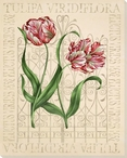 Emperor Tulip Flowers Wrapped Canvas Giclee Print Wall Art