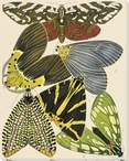 Exotic Butterfly I Wrapped Canvas Giclee Print Wall Art