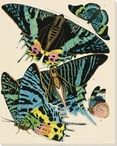 Exotic Butterfly II Wrapped Canvas Giclee Print Wall Art