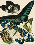 Exotic Butterfly III Wrapped Canvas Giclee Print Wall Art