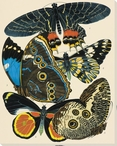 Exotic Butterfly IV Wrapped Canvas Giclee Print Wall Art