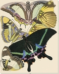 Exotic Butterfly V Wrapped Canvas Giclee Print Wall Art