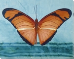 Fancy Butterfly Study Wrapped Canvas Giclee Print Wall Art