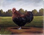 Fancy Rooster Bird Wrapped Canvas Giclee Print Wall Art